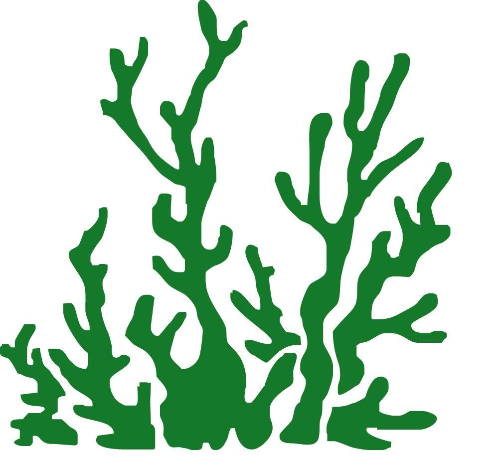 vertes x cm - algues vertes x cm